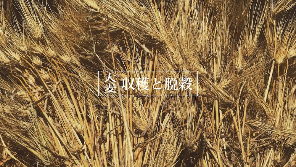 大麦の脱穀