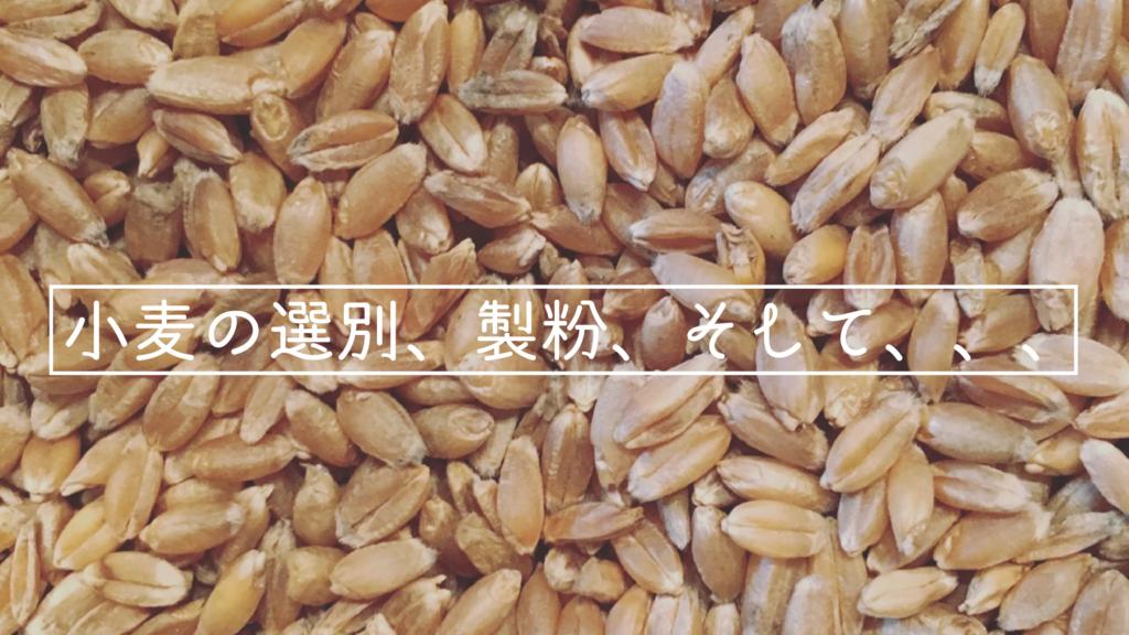 小麦の脱穀、粉砕、そして発酵。