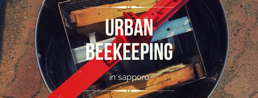 街の蜂と春