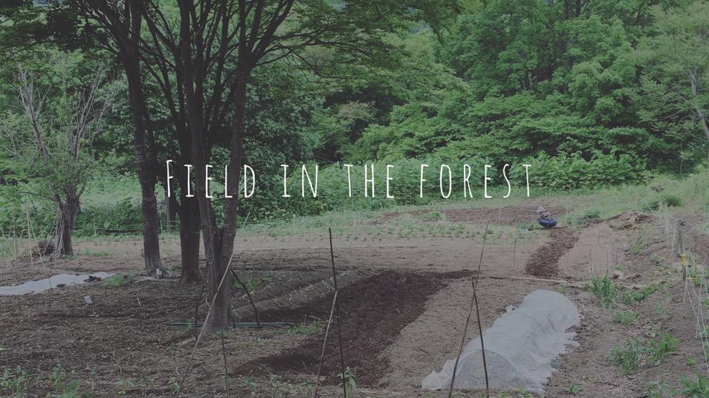 森の畑の5月