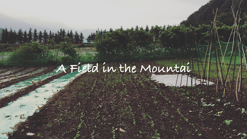山の畑の6月