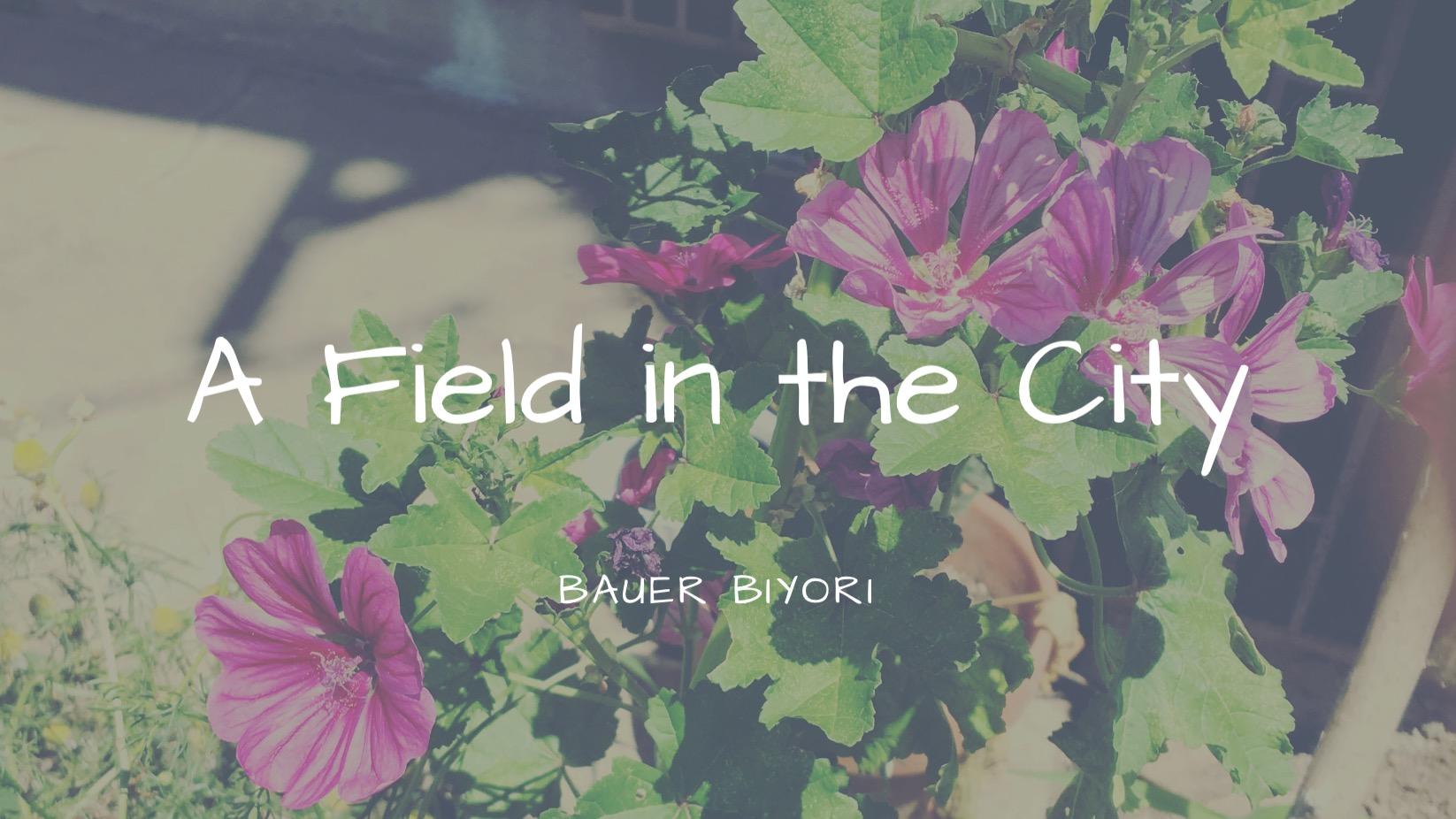 街の畑の6月
